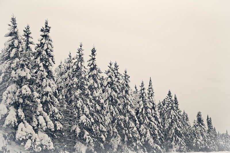 Winter Wonderland - #2