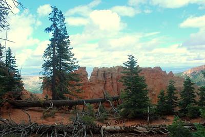 Bryce Canyon NP-18