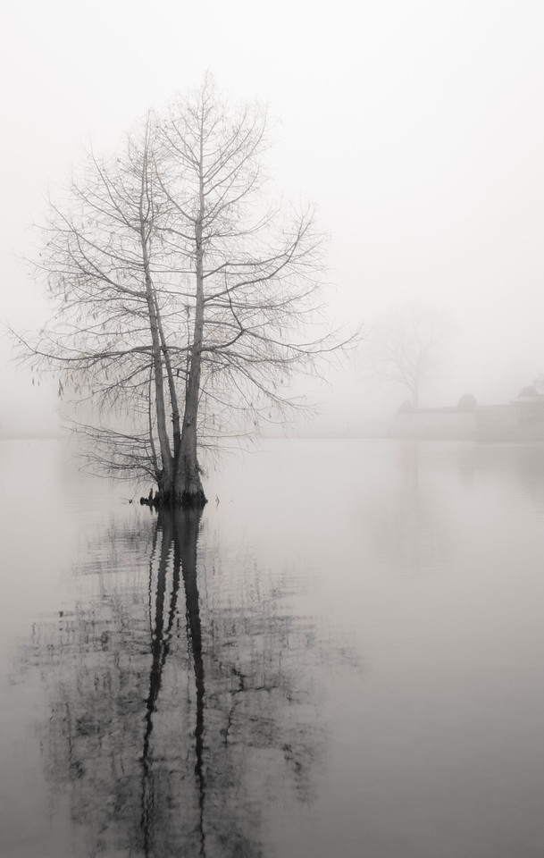 Monochrome / Black & White