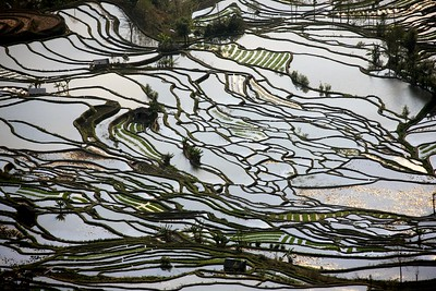 CHINA YUNNAN TERRACED RICE FIELDS