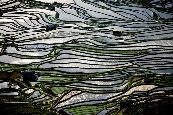 CHINA YUNNAN TERRACED RICE FIELDS