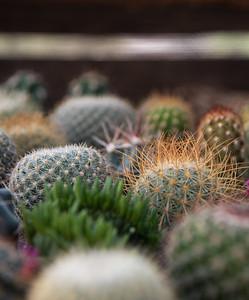 cactus 1-0292-2