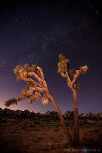 Joshua tree with faint Milky Way visible. Joshua Tree National Park