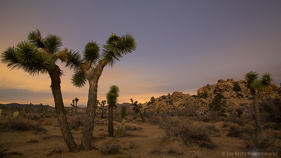 Long-exposure landscape, illuminated only by moonlight. Joshua Tree National Park
