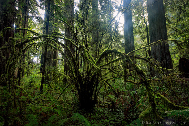 Redwoods State Park, California