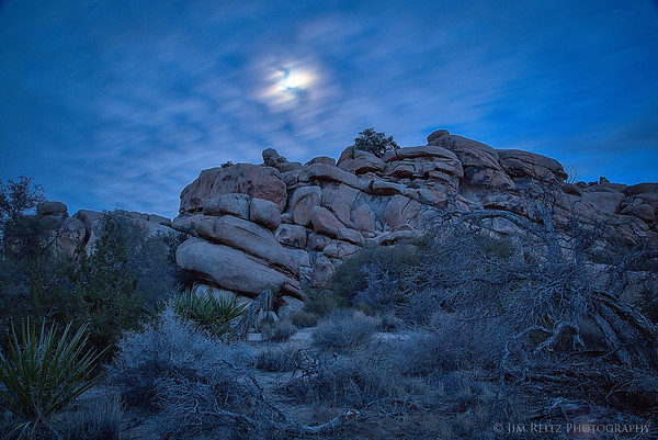 Diffused moonlight illuminates the desert landscape, Joshua Tree National Park