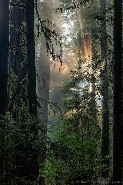 Redwoods State Park, California