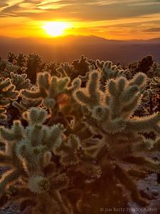 Cholla Sunrise