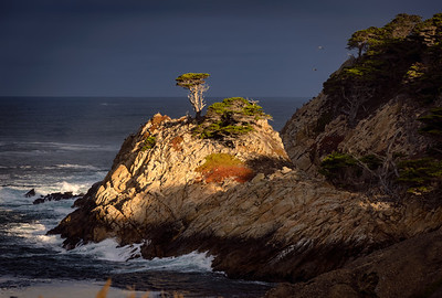 Point Lobos State Reserve, California