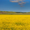 Panoramic view of the wildflower field along Soda Lake Rd.