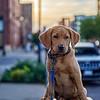 Cooper visits Minneapolis
