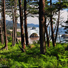 "<font color=""#FFFFFF"" size=""4"" face=""Verdana, Arial, Helvetica, sans-serif"">Beach Through Trees</font><br> Cannon Beach, Oregon"