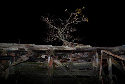 Tree growing on abandoned barge