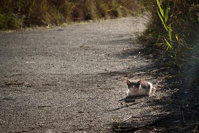 Kitten on derelict trail