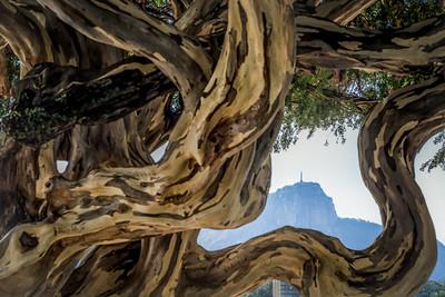 árvore jacaré