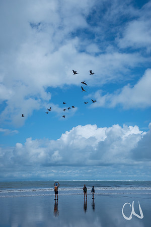 pelicans and tourists