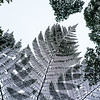 Cloud Forest Leaves
