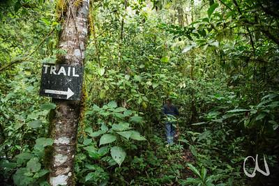 Weg durch den Bergregenwald, San Gerardo de Dota, Cerro de la Muerte, Costa Rica