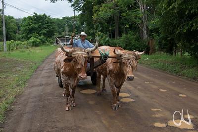 Bauer mit Ochsenkarren, Tárcoles, Costa Rica