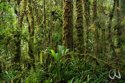 Sendero de las Cataratas, San Gerardo de Dota, Cerro de la Muerte, Costa Rica
