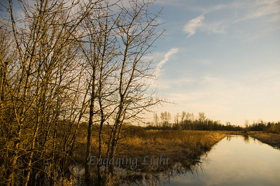 Tranquil Evening - Ankeny Wildlife Refuge, Oregon