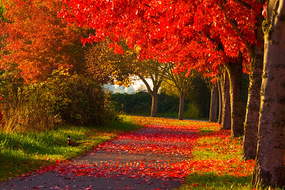 Fall and Pheasant