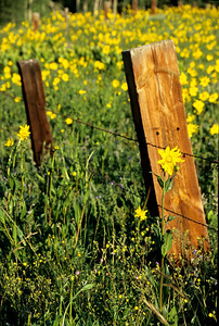 crested_butte_wildflowers_012