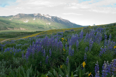 crested_butte_wildflowers_015