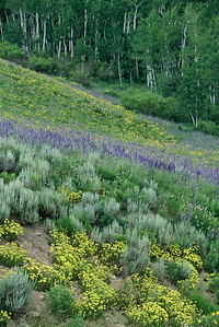 crested_butte_wildflowers_001