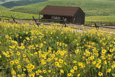 crested_butte_wildflowers_022