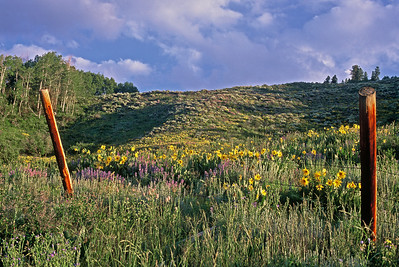 crested_butte_wildflowers_003