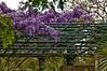 Dallas Arboretum-8
