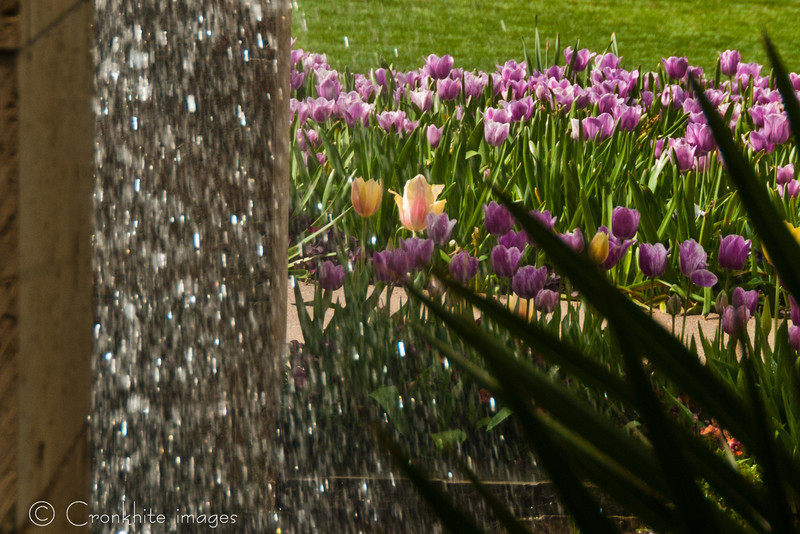 Dallas Arboretum-13