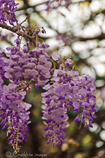 Dallas Arboretum-9