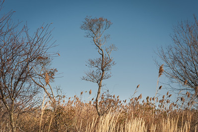 Tree and rushes