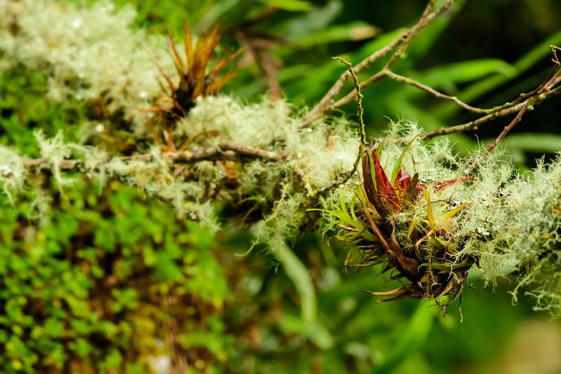 Bromeliads and moss.