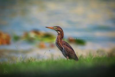 Destin_Birds-1-5