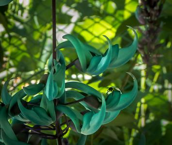 jardim botanico, flor de jade,rj,