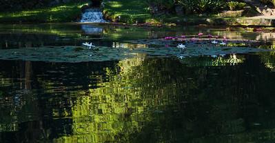 Lago Jardim botanico- RJ