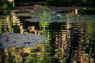 lago de lótus