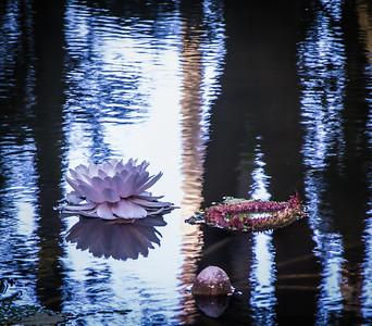 lotus lac