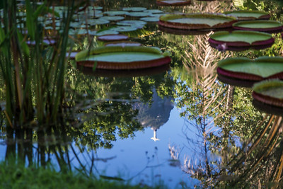 corcovado no lago
