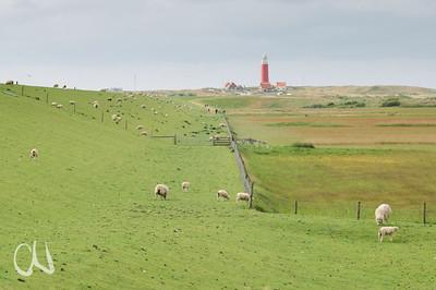 Leuchtturm und Deichlandschaft mit Schafen auf der Insel Texel, Niederlande, sheep and lighthouse, island of Texel, The Netherlands
