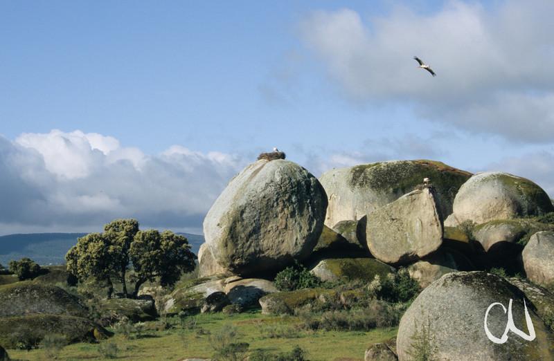 Storchenfelsen von Caceres, Extremadura, Spanien