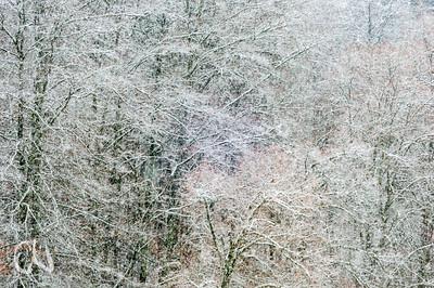 Winterlandschaft, Wald, Schaichtal, Naturpark Schönbuch, Deutschland, Germany