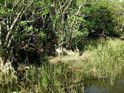 The Florida Everglades