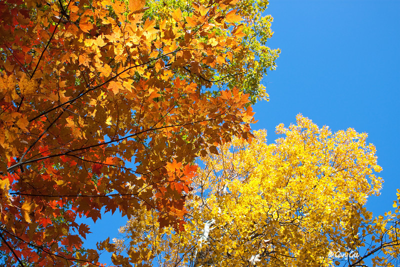 More Blue Skies and Colorful Trees!