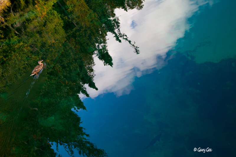 Big Springs in Michigan- note the 2+ foot long trout swimming by!