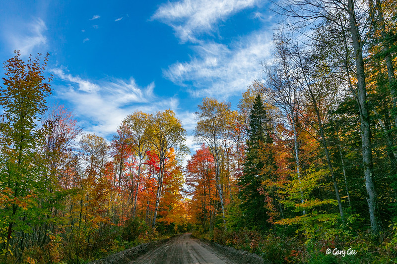 Fall Color Scene on Dirt Road - 2019