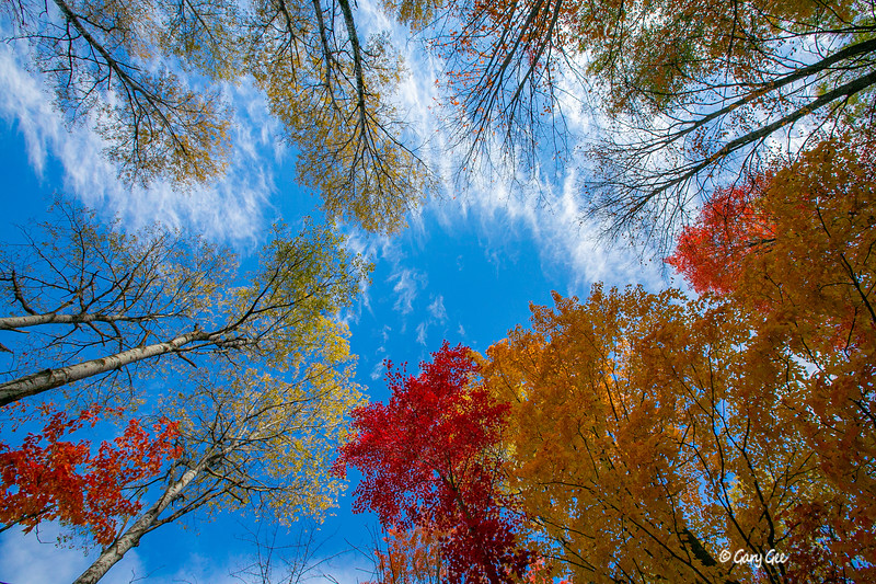 Colorful Tree Tops and Wispy Clouds - 2019
